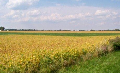 hasil-pertanian-yang-wajib-dizakati
