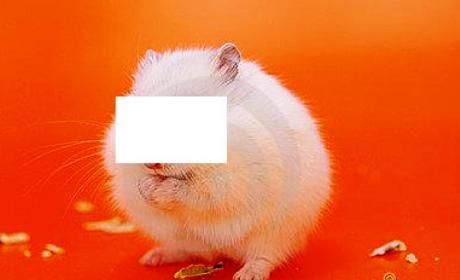 hukum-memelihara-hamster