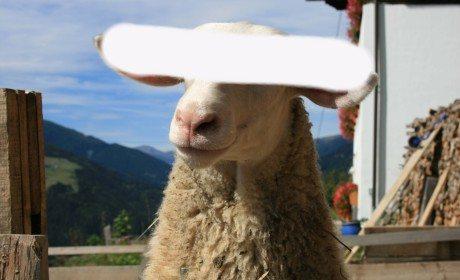 Kurban kambing untuk satu keluarga