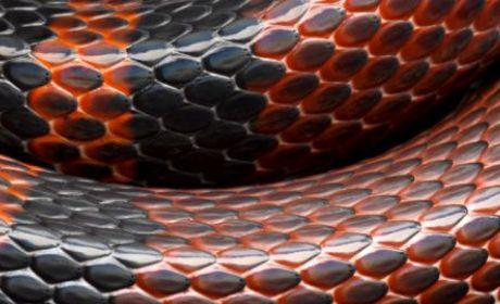 ular wajib dibunuh
