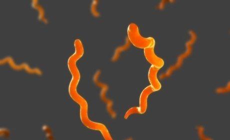 mengobati sakit sifilis