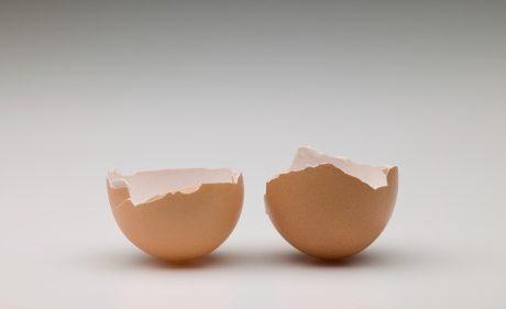 telur burung