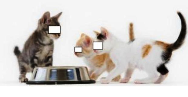 pengaruh kucing pada wanita