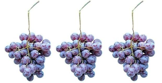 apa hamil anggur
