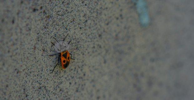 najis serangga